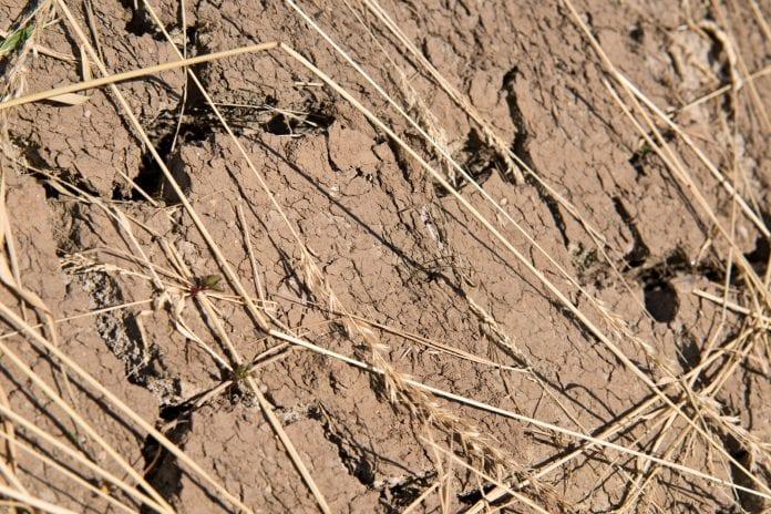 Sucha gleba