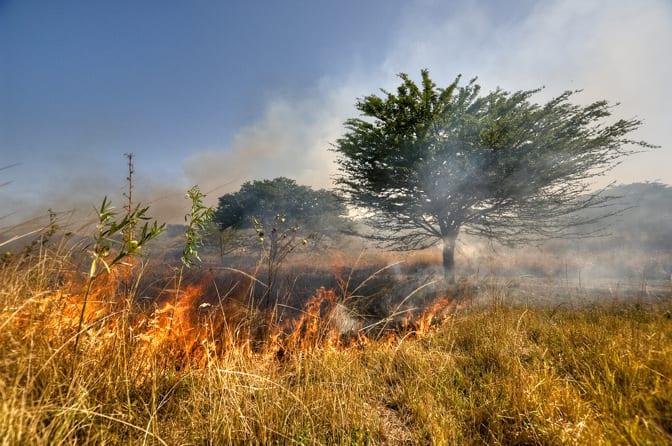 Wypalanie traw - sankcje karne i utrata dopłat