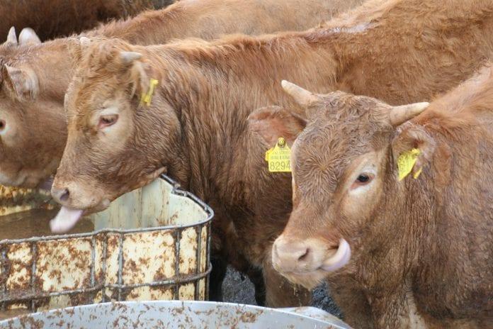 Wojna o wołowinę