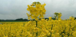 Aktualne zagrożenia w uprawach rolniczych