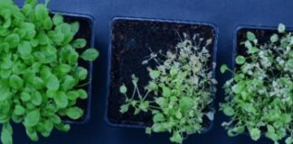 Odkrycie herbicydów o zwiększonej efektywności i bezpieczeństwie działania
