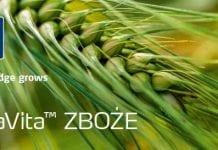 Właściwa formuła dla zbóż