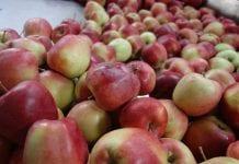 Rolnicy dostaną szybciej pieniądze zadostarczone owoce