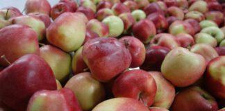 Rolnicy dostaną szybciej pieniądze za dostarczone owoce