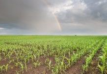 Aminokwasy w rolnictwie - regeneracja i pobudzenie do intensywnego wzrostu