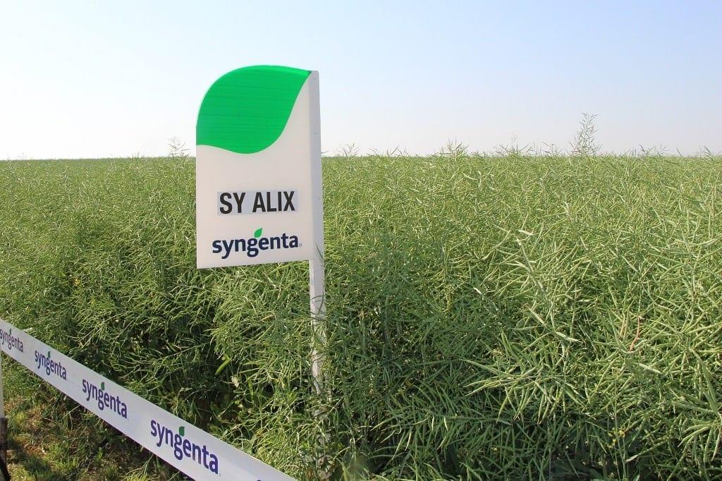 SY Alix