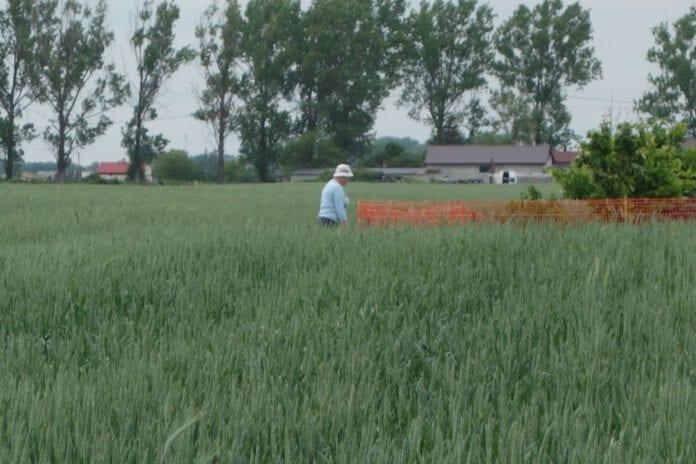 Nastroje w rolnictwie w związku z COVID-19