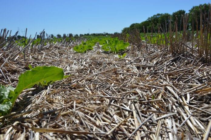 Rolnictwo regeneracyjne, bioróżnorodność, ochrona gleb